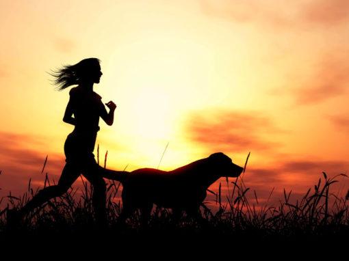 Pets Insurances