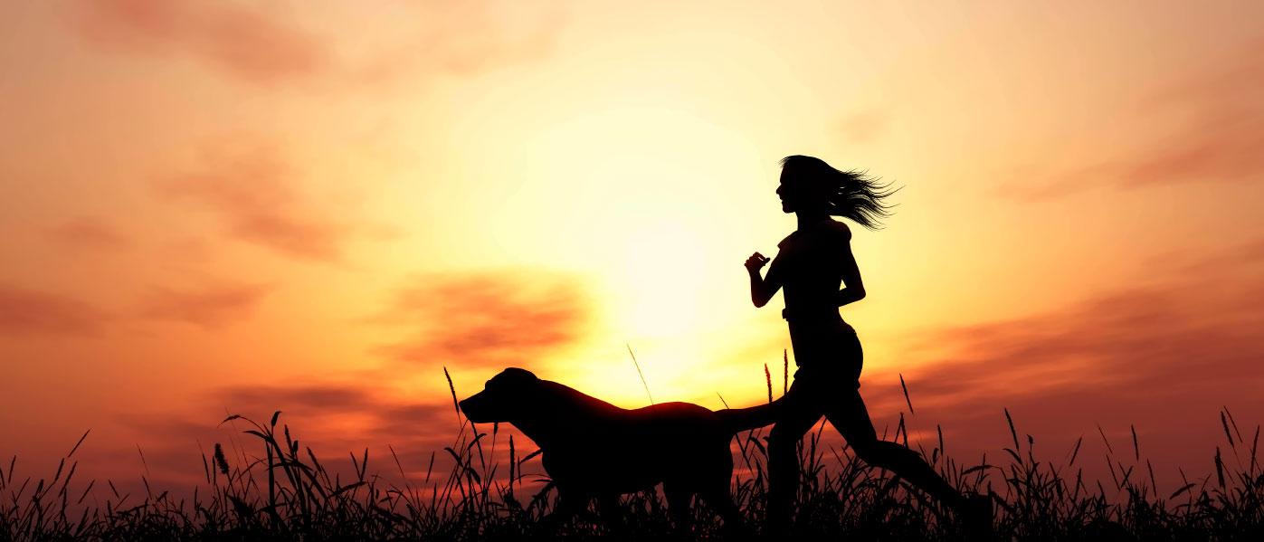 pets insurance - Carolina Romano